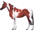 American Paint Horse image
