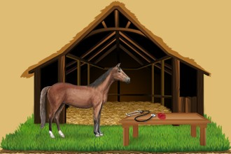 Take care of the horses belonging to other breeders in your equestrian center and help them grow and progress every day.